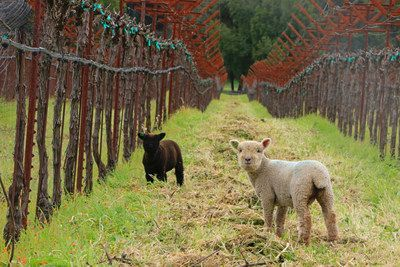 Baby Health in Winter Seven Reasons to Love Springtime in California Wine Country
