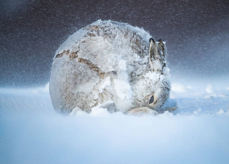 "Baby Health in Winter Take A Look At Some Of The Best Photos From The ""2020 BigPicture Natural World Photography"" Competition (30 pics)"
