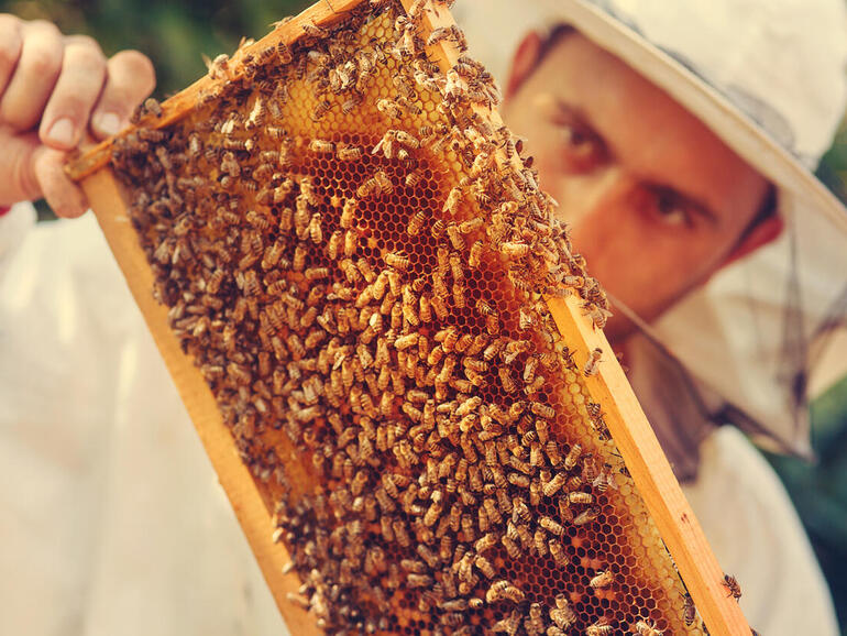 Baby Health in Winter How SAS uses IoT and analytics to help save honey bees, the world's No. 1 food crop pollinator – TechRepublic